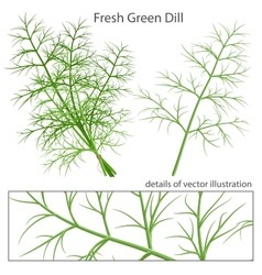 Fresh and green dill vector