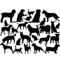 Cats and dogs vector