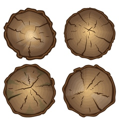 Tree stump round cut with annual rings vector