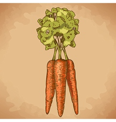 Engraving carrot retro vector