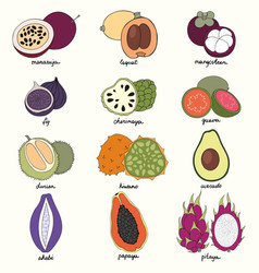 Exotic fruits set of vector