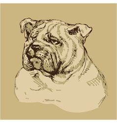 Bulldog head - hand drawn -sketch in vintage style vector