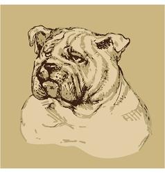 Bulldog head - hand drawn -sketch in vintage style vector