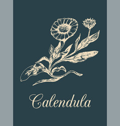 Calendula with flowers hand vector