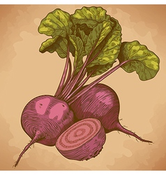 Engraving beet retro vector