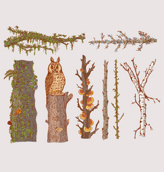 hand drawn forest trees set vector image