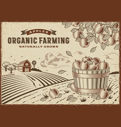 apple organic farming landscape vector image