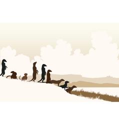 Meerkat lookouts vector image