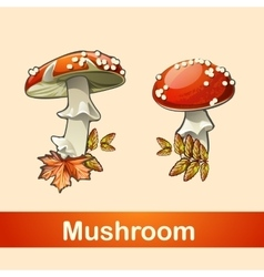 Two fly agaric closeup with a different side vector