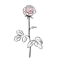 Pink rose flower isolated on the white background vector image