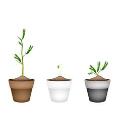 Fresh water mimosa in ceramic flower pots vector