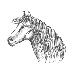 White horse with mane along neck sketch portrait vector