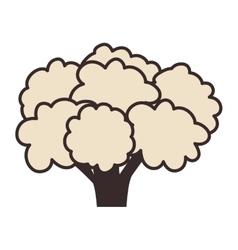 cauliflower vegetable food vector image