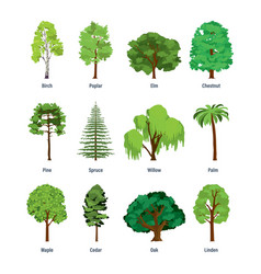 Collection of different kinds of trees vector