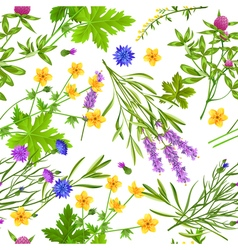 Herbs And Wild Flowers Seamless Pattern vector image vector image