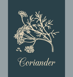 Coriander with seeds and vector