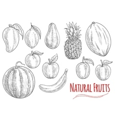 Sketch of fresh fruits for food and drink design vector
