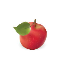 an apple is red with a leaf apple vector image vector image