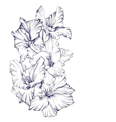 Floral blooming gladiolus hand drawn vector