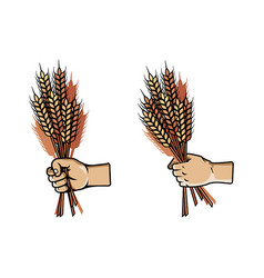 hand grab bunch of barley vector image