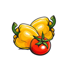 whole ripe red tomato and two yellow bell peppers vector image