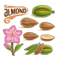 Set of almond nuts vector