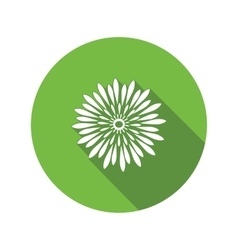 Chrysanthemum flower icon Floral symbol Round vector image