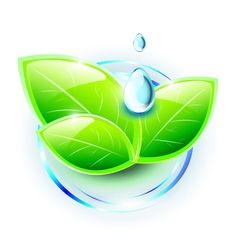 Green shiny leaves with small droplets of water vector image