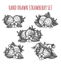 Strawberry sketch icons set vector
