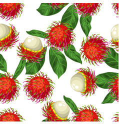 Seamless pettern with rambutan isolated on white vector
