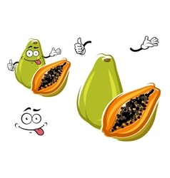 Cartoon exotic hawaiian green papaya fruit vector