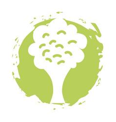 Broccoli fresh vegetable isolated icon vector
