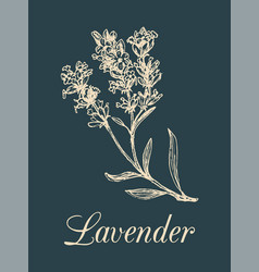 lavender branch hand drawn vector image