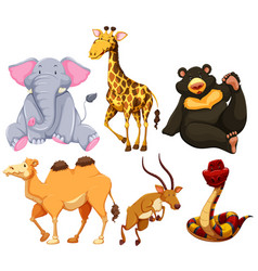 Six different types of wild animals vector