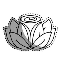 Contour beauty rose with petals plant vector