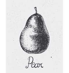 Hand drawn pear engraving style hand vector