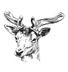 Hand sketch of a young deer vector