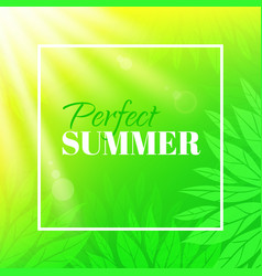 Perfect summer banner with typographic design vector