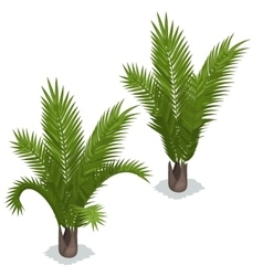 Large palm leaves on white background vector