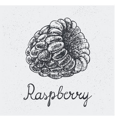 Hand drawn raspberry engraving style hand vector