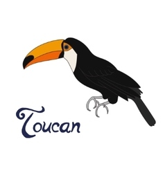 Bird toucan vector