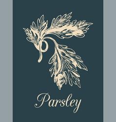 parsley hand drawn sketch of vector image