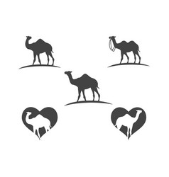 camel icon logo template design vector image