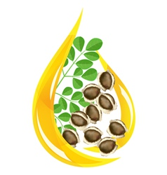 moringa oleifera oil vector image