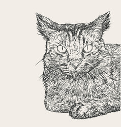 Sitting cat hand draw sketch vector