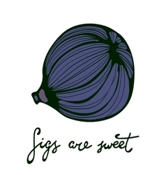 Figs are sweet hand drawn figs eco food vector