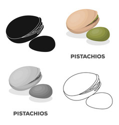 green pistachio in the shelldifferent kinds of vector image
