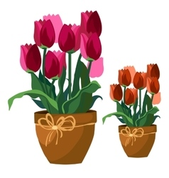 Pink and red tulips in clay pot flowers isolated vector