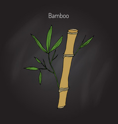 bamboo branch with leaves vector image