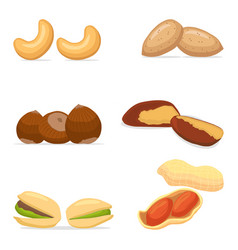 for ripe set nuts vector image